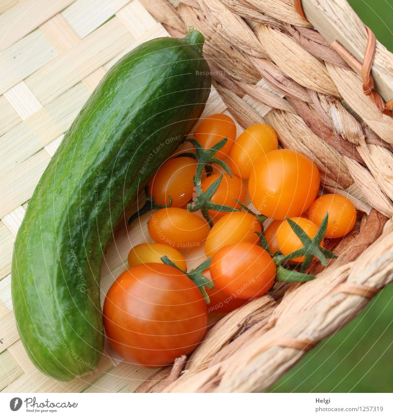 vielfältig | eigene Ernte... Lebensmittel Gemüse Frucht Tomate Gurke Ernährung Bioprodukte Vegetarische Ernährung Korb Sommer liegen authentisch frisch