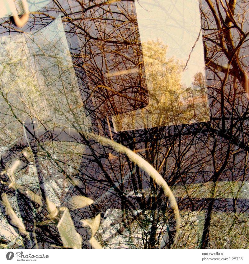 kontrollzentrum Traktor Lenkrad Reflexion & Spiegelung Fenster Schiebedach Verkehr steering wheel Gerät steuerzentrale sunroof fahrerhaus