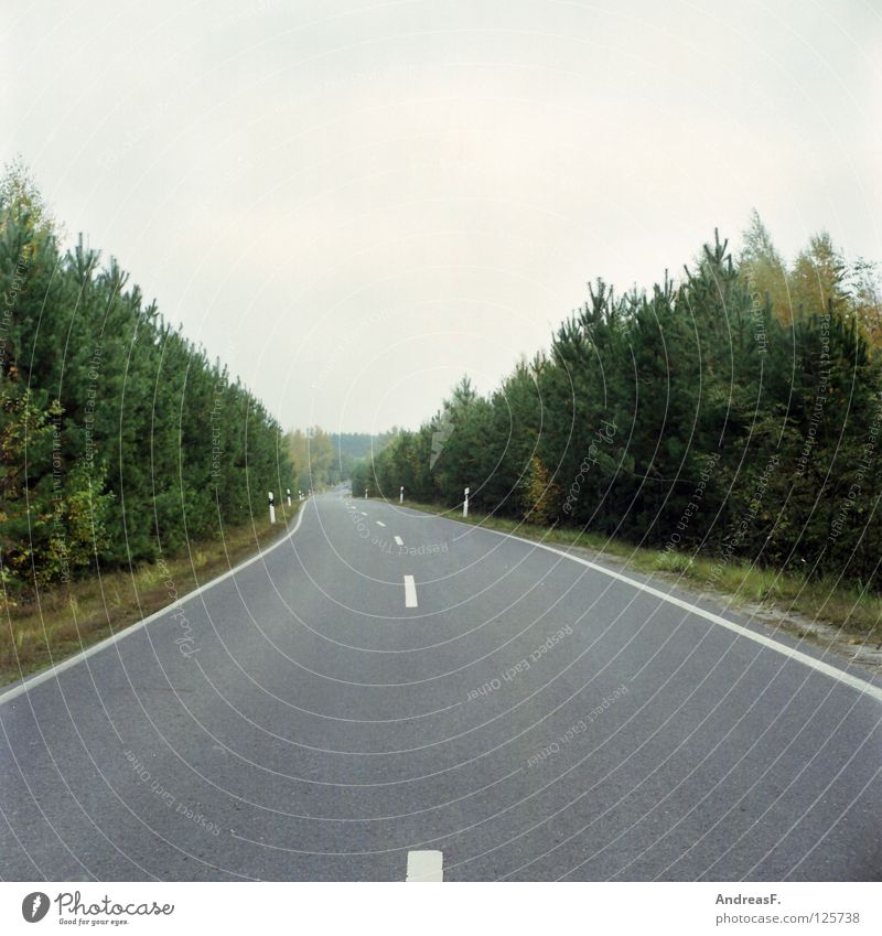 Road to... Wald Allee Fahrbahn Straßenrand Landstraße Asphalt Teer Fahrbahnmarkierung Mittelformat Verkehr Unfallgefahr Straßenverkehr zielstrebig Pampa