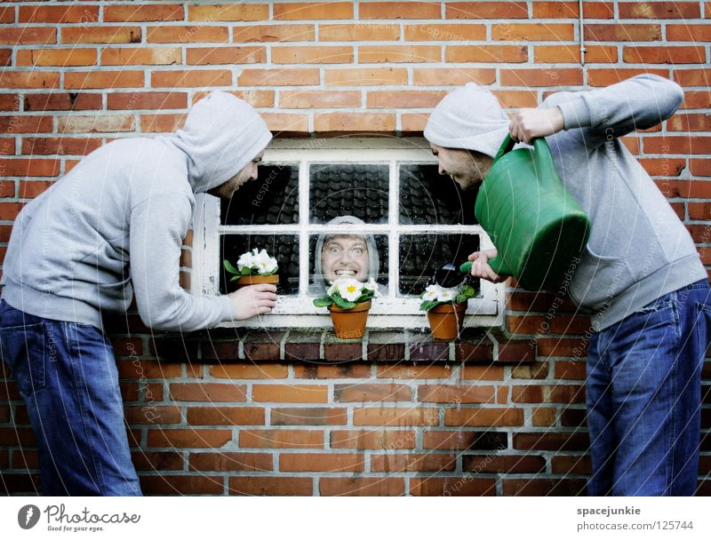Flowers Wand Mauer Backstein Fenster Fensterscheibe Psychiatrie verrückt gefangen Seele geschlossen Mann skurril Humor Freak Blume Topfpflanze Fensterbrett