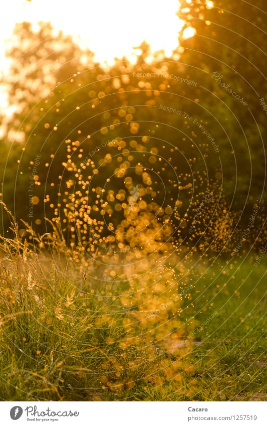 Mückentanz 2 Natur Pflanze grün Sommer Sonne Erholung ruhig Umwelt Wärme Wiese Gras Glück Garten Stimmung orange wild