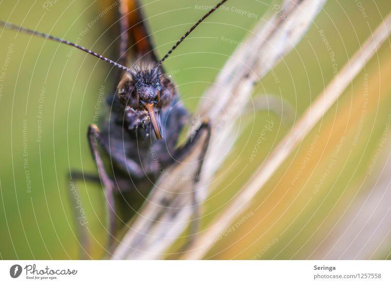 Im Auge des Betrachters Pflanze Tier Schmetterling Tiergesicht Flügel 1 fliegen Farbfoto mehrfarbig Außenaufnahme Nahaufnahme Detailaufnahme Makroaufnahme Tag