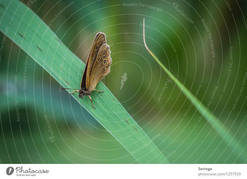 Pause Tier fliegen hängen Schmetterling