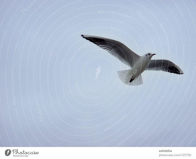 kommt ein Vogel geflogen ... Himmel weiß Meer blau Freiheit Vogel fliegen Luftverkehr Flügel Schwung