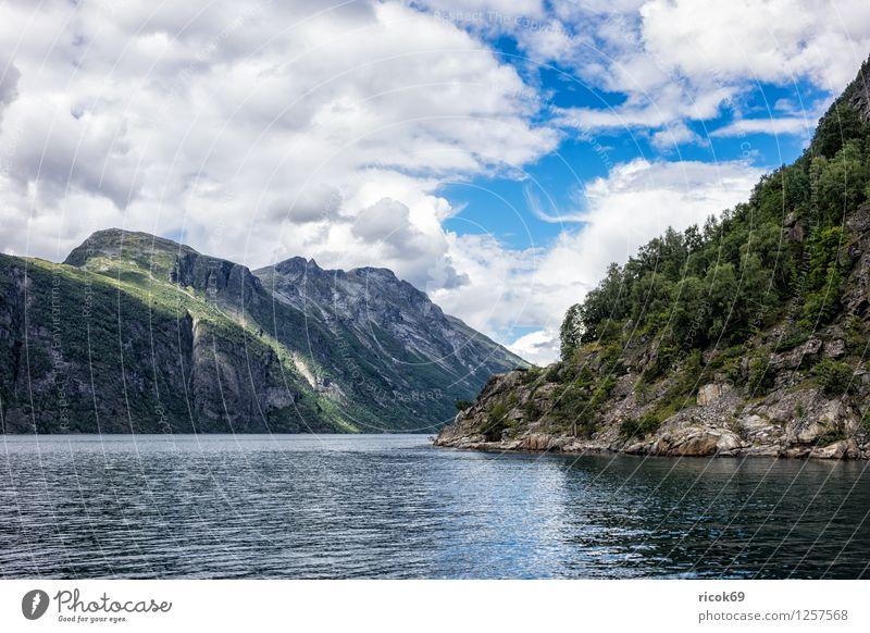 Blick auf den Geirangerfjord Erholung Ferien & Urlaub & Reisen Berge u. Gebirge Natur Landschaft Wasser Wolken Fjord Idylle Tourismus Norwegen Møre og Romsdal