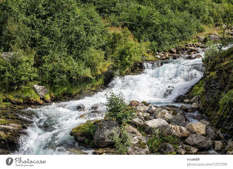 Ein Fluß in Geiranger Erholung Ferien & Urlaub & Reisen Berge u. Gebirge Natur Landschaft Wasser Baum Wald Bach Fluss Idylle Geirangerfjord Norwegen