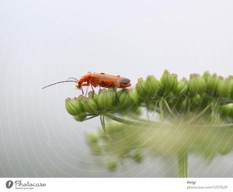 Bockkäfer Natur Pflanze grün Sommer Blume Tier Umwelt Leben natürlich klein grau braun Park Wildtier authentisch einzigartig