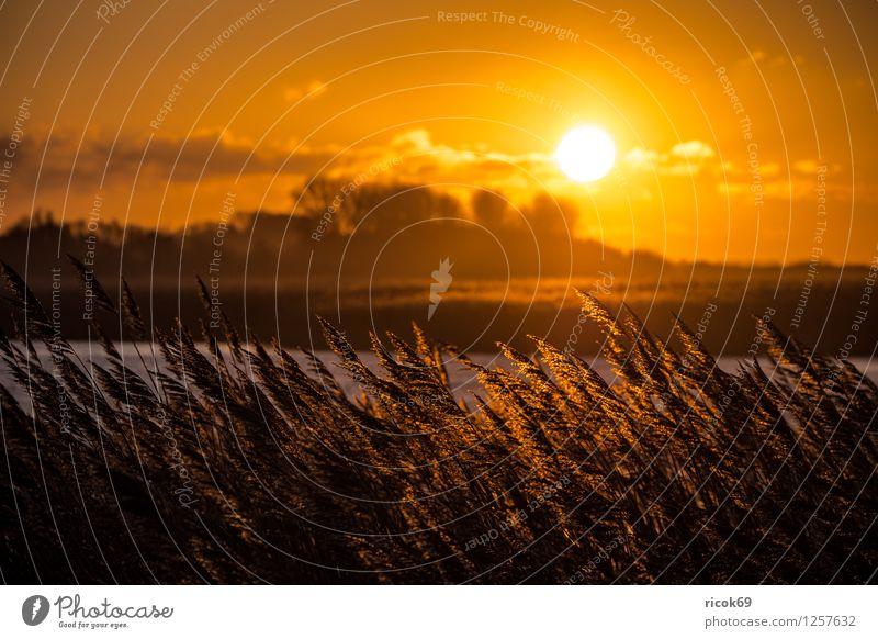 Sonnenuntergang am Riedensee Erholung Ferien & Urlaub & Reisen Landschaft Wasser Küste Romantik Idylle Schilfrohr Mecklenburg-Vorpommern Buk Kühlungsborn Himmel