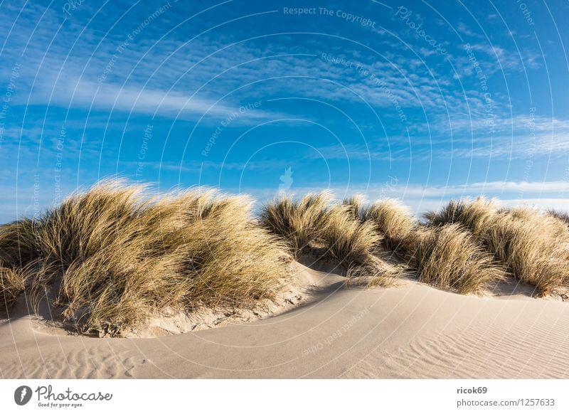 Düne an der Ostsee Natur Ferien & Urlaub & Reisen Erholung Meer Landschaft Wolken Strand Küste Sand Tourismus Wind Sturm Mecklenburg-Vorpommern Rostock