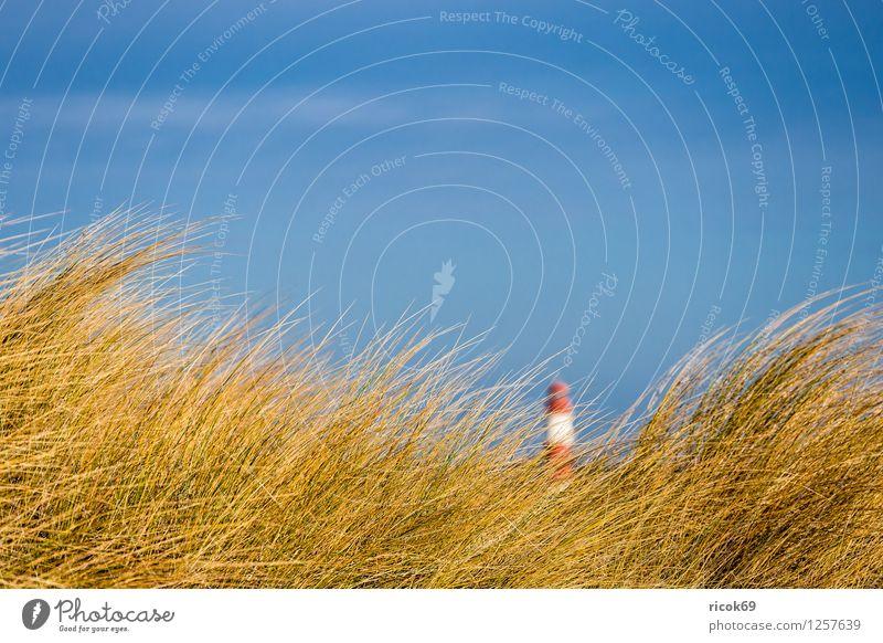 Düne in Warnemünde Natur Ferien & Urlaub & Reisen blau Erholung Meer rot Landschaft Wolken Strand gelb Küste Tourismus Wind Ostsee Sturm Leuchtturm