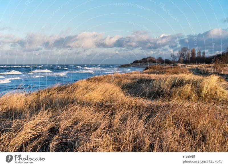 Blick auf die Ostseeküste Erholung Ferien & Urlaub & Reisen Strand Meer Wellen Natur Landschaft Wasser Sturm Küste Holz Romantik Idylle Buhnen Düne Dünengras