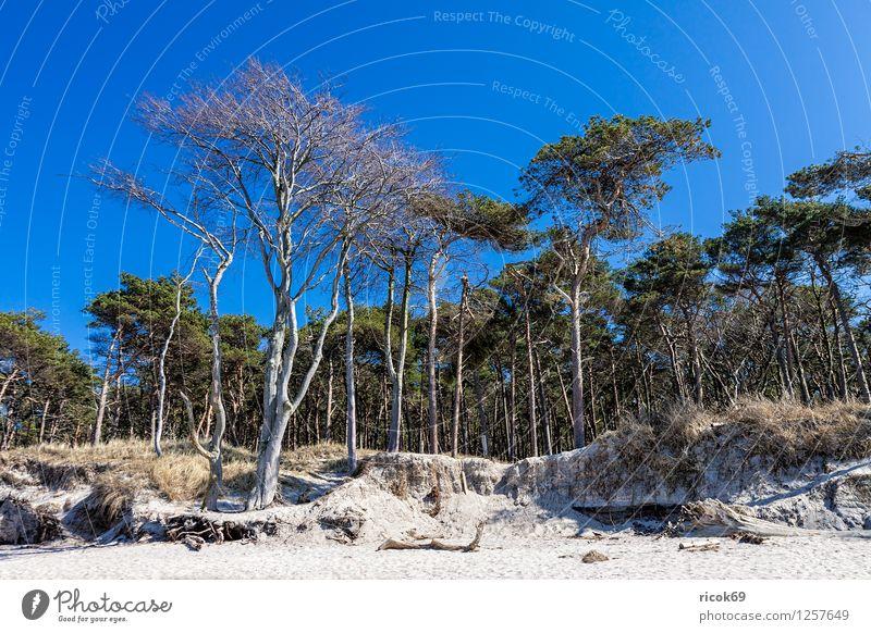 Küstenwald an der Ostsee Natur Ferien & Urlaub & Reisen blau Baum Erholung Meer Landschaft Wolken Strand Wald Holz Sand Idylle Ast Romantik