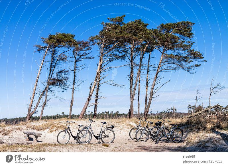 Küstenwald an der Ostsee Natur Ferien & Urlaub & Reisen blau Wasser Baum Erholung Meer Landschaft Wolken Strand Wald Holz Sand Idylle Ast
