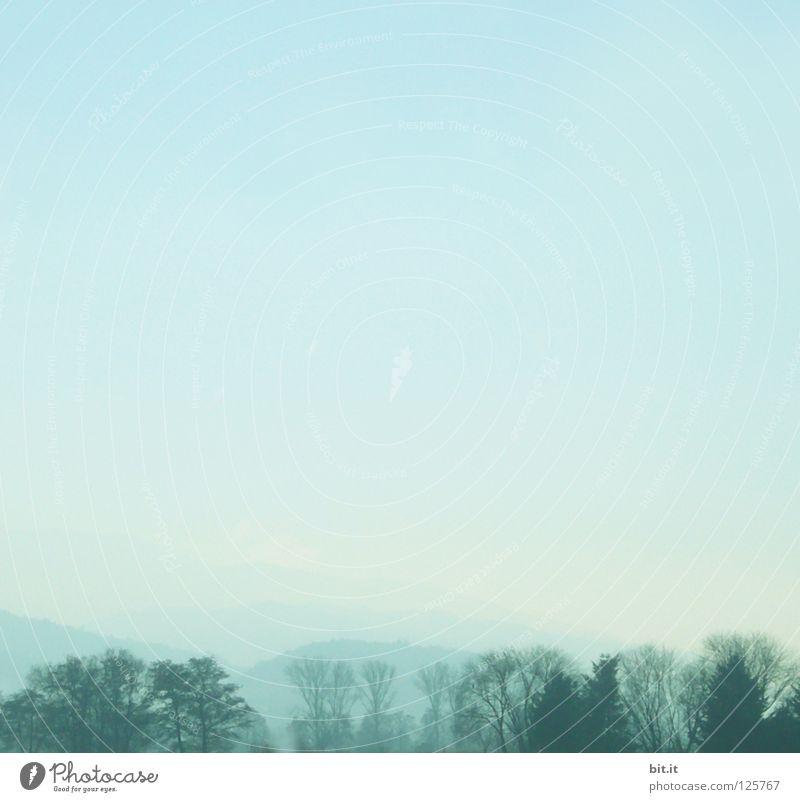 SKYLINE III Rheintal türkis Wetter Hintergrundbild Muster schlechtes Wetter Himmel Faust Aussicht Panorama (Aussicht) Tanne Baum Wald Baumreihe Allee Winter