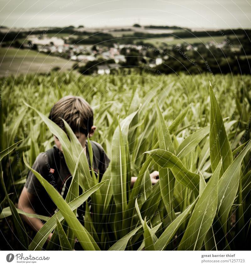 Junge im Maisfeld Mensch maskulin Kind Kindheit Leben Körper 1 3-8 Jahre Umwelt Natur Landschaft Tier Himmel Wolken Sommer Klima Wetter Pflanze Nutzpflanze Feld