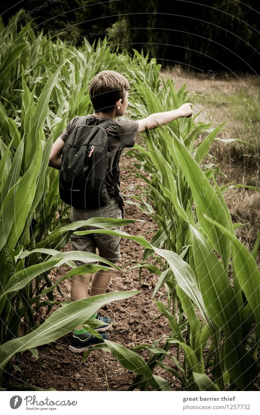 Junge zeigt auf etwas, das nicht mehr im Bild ist Mensch Kind Natur Jugendliche Pflanze grün Sommer Landschaft Tier Wald Umwelt gelb Leben Frühling braun