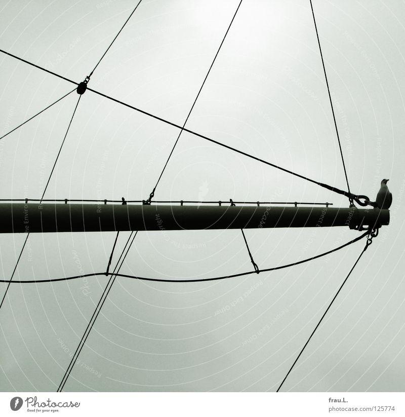 Gallionsfigur Himmel Hafen Schifffahrt Segelschiff Vogel historisch Möwe Takelage Farblosigkeit Strommast Elbe Museumsschiff Hamburger Hafen Außenaufnahme