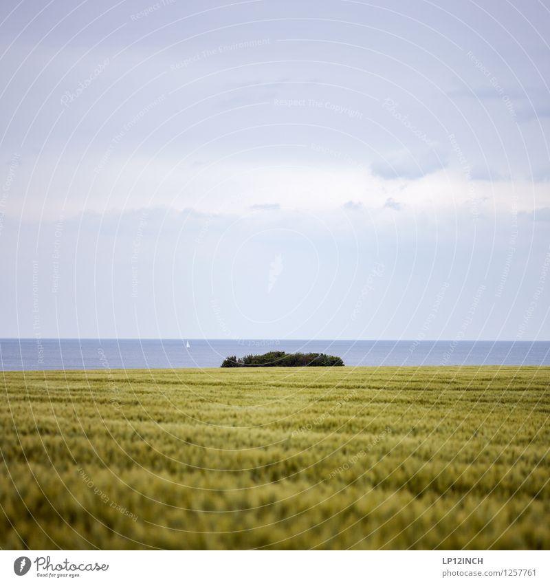 sWEED. II Natur Ferien & Urlaub & Reisen grün Sommer Wasser Landschaft Tier Ferne Umwelt Wiese Gras Küste Freiheit Feld Tourismus genießen