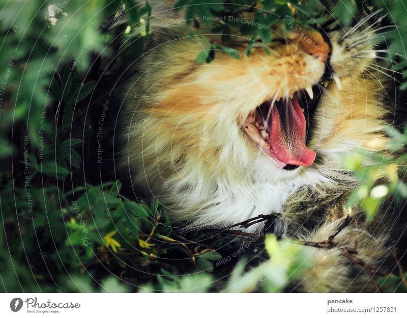 give me a cry! Natur Sträucher Haustier Katze 1 Tier schreien Gefühle Aggression Zunge Gebiss Haare & Frisuren Maul gähnen Katzenzunge Katzenkopf Farbfoto