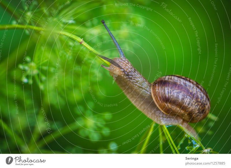 Aufstieg im Schneckentempo Pflanze Tier 1 Bewegung krabbeln Farbfoto mehrfarbig Außenaufnahme Nahaufnahme Detailaufnahme Makroaufnahme Tag Licht Kontrast
