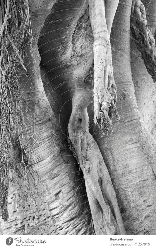 Lebensvielfalt Natur Pflanze Baum Park Holz wählen ästhetisch Erotik exotisch fantastisch rund Lebensfreude Wandel & Veränderung Mammutbaum Vielfältig