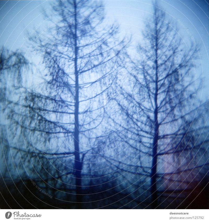 Ghost Spruces. Baum unheimlich analog Fichte Nadelbaum Diana+ Gespenstfichte spukhaft Lomografie Vignettierung Silhouette