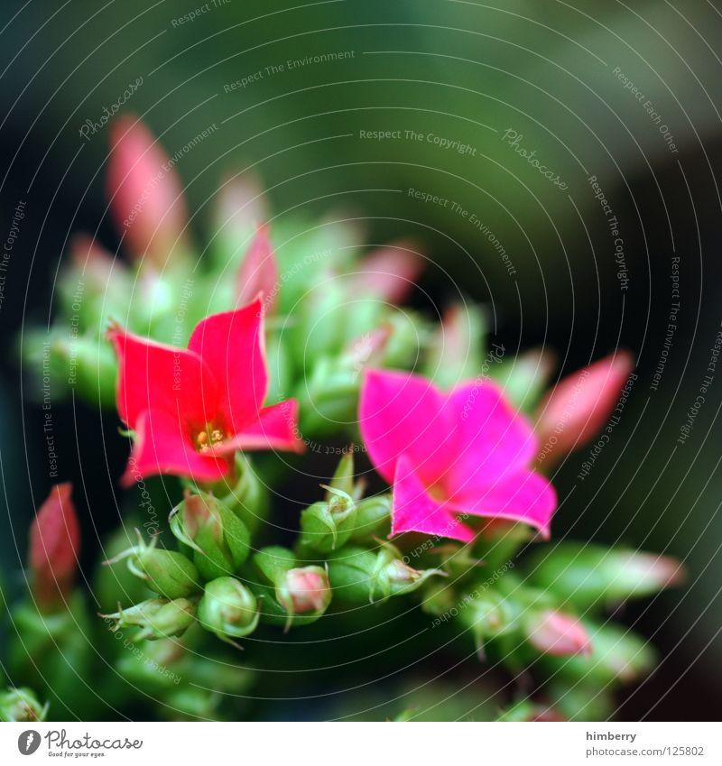fix & foxy Natur Pflanze schön Farbe weiß Sommer Blume gelb Frühling Blüte Hintergrundbild Feste & Feiern Wachstum frisch Blütenknospen Botanik