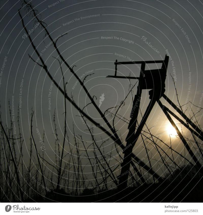 waidmannsheil Tier Tod Wetter Feld Wildtier Nebel warten gefährlich Turm Jagd Gewalt Horn Amerika Ente Sitzgelegenheit Leiter