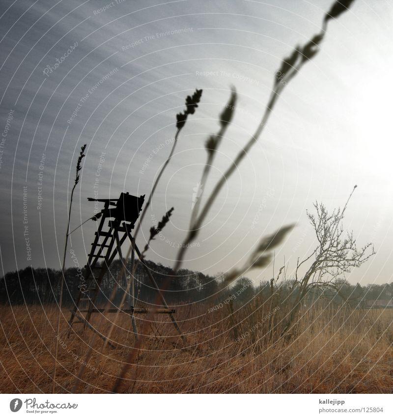 waidmannsdank Jäger Hochsitz Feld Wald Reh Hirsche Gewehr Büchse Knall Feindschaft Jagd Bock Volksmusik Horn Zwölfender Umweltschutz töten Deckung Wetter Nebel