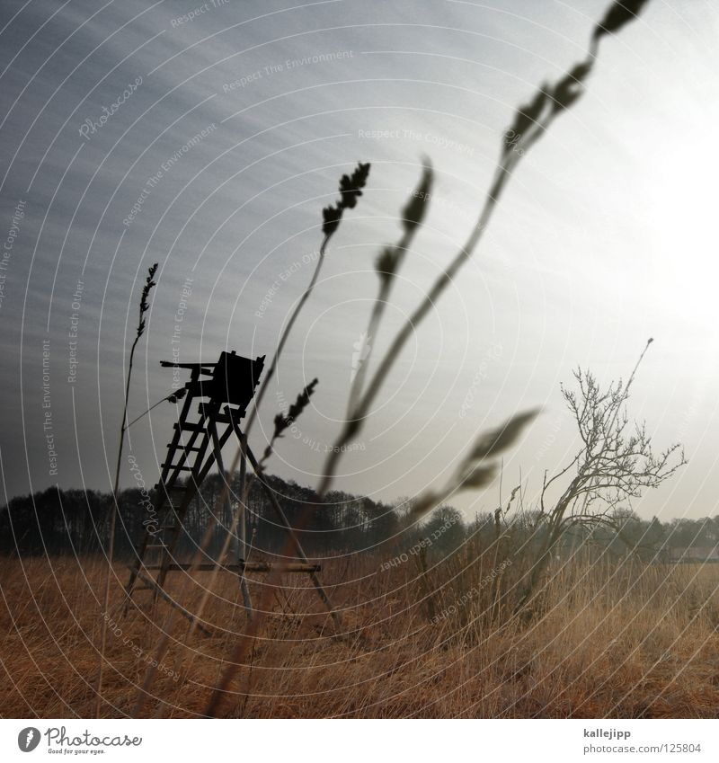 waidmannsdank Tier Wald Tod Wetter Feld Wildtier Nebel warten gefährlich Turm Jagd Gewalt Horn Amerika Ente Sitzgelegenheit