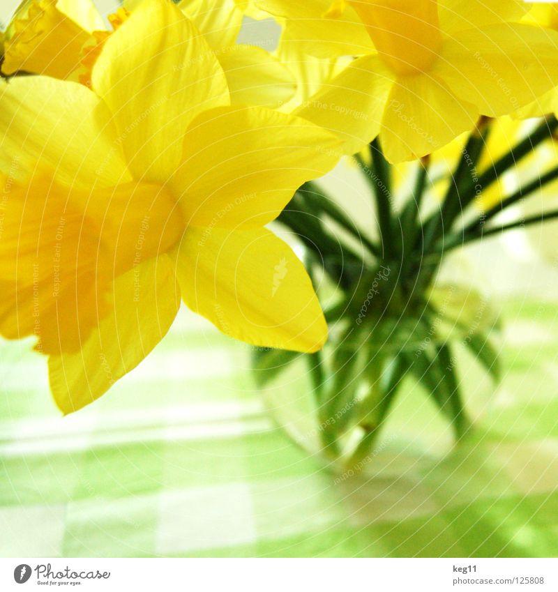 Noch mehr Frühlingsnarzissen Pflanze Blume gelb Feste & Feiern Tisch Stengel Blumenstrauß Ei Decke Tulpe Gänseblümchen Vase Osterei Glocke Narzissen