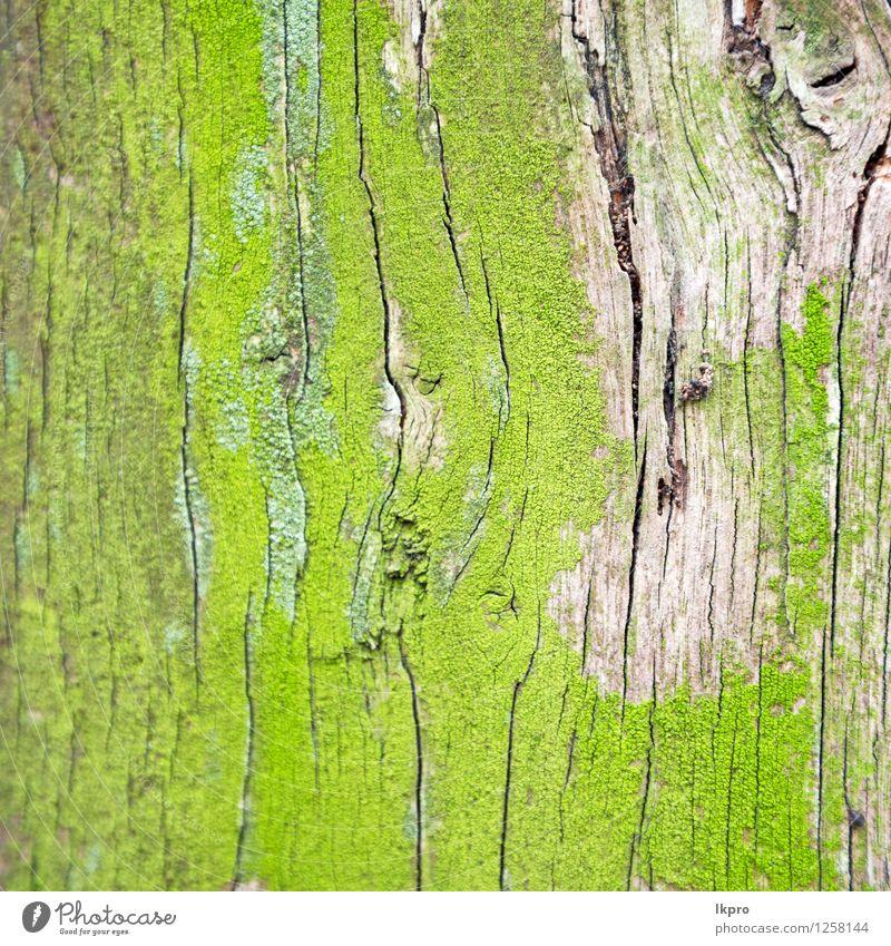 Natur alt Pflanze grün weiß Baum Wald schwarz natürlich braun Linie Design Material Riss Tapete Oberfläche
