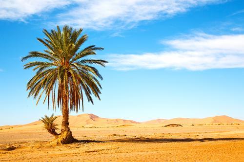 Natur Ferien & Urlaub & Reisen Pflanze schön Sommer Baum Einsamkeit Blatt Umwelt natürlich Garten Stein Sand Felsen wild Tourismus