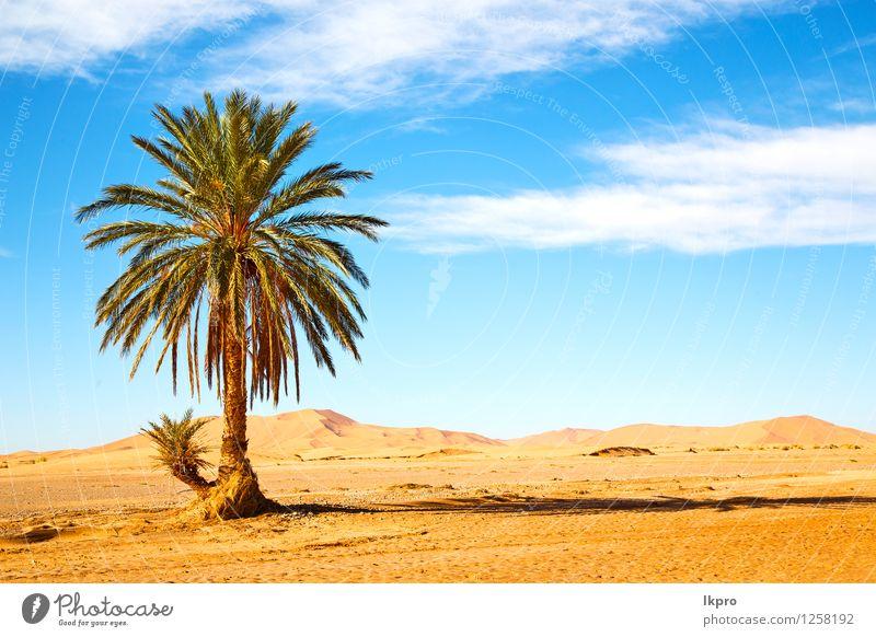 Palme in der Wüste Oasi Natur Ferien & Urlaub & Reisen Pflanze schön Sommer Baum Einsamkeit Blatt Umwelt natürlich Garten Stein Sand Felsen wild Tourismus