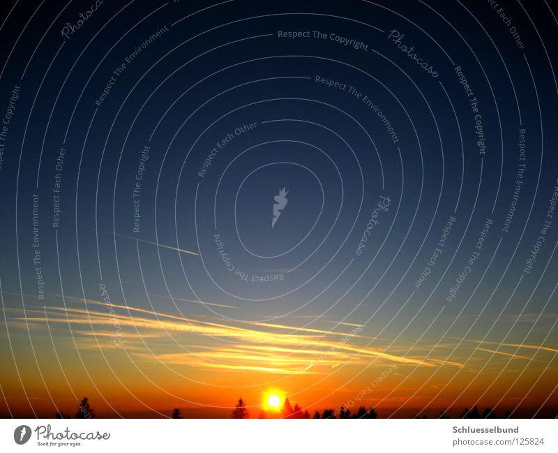 Untergehende Sonne Himmel Baum Wald blau gelb schwarz Sonnenuntergang Kondensstreifen Baumkrone Himmelskörper & Weltall orange Kreis Sonnenlicht Menschenleer