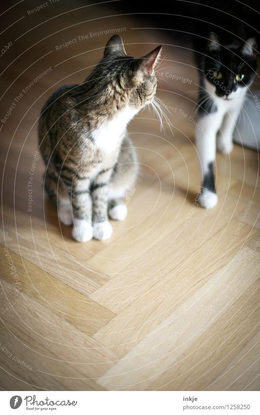 Thelma und Louise Lifestyle Häusliches Leben Wohnung Fischgrätenmuster Parkett Haustier Katze 2 Tier Tierpaar hocken Blick Gefühle Einigkeit loyal Sympathie