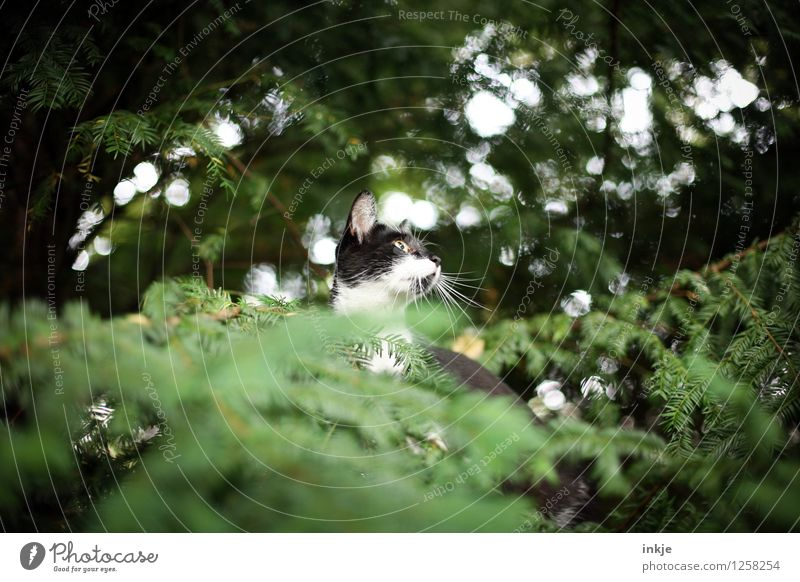 Rettung naht. Katze Natur grün Sommer Baum Tier Wald Tierjunges Frühling Gefühle Herbst Garten Lifestyle oben Park Freizeit & Hobby
