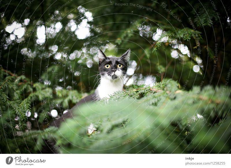 Mami...... ...? Lifestyle Freizeit & Hobby Natur Frühling Sommer Pflanze Baum Grünpflanze Eibe Nadelbaum Garten Park Wald Tier Haustier Katze Tiergesicht 1