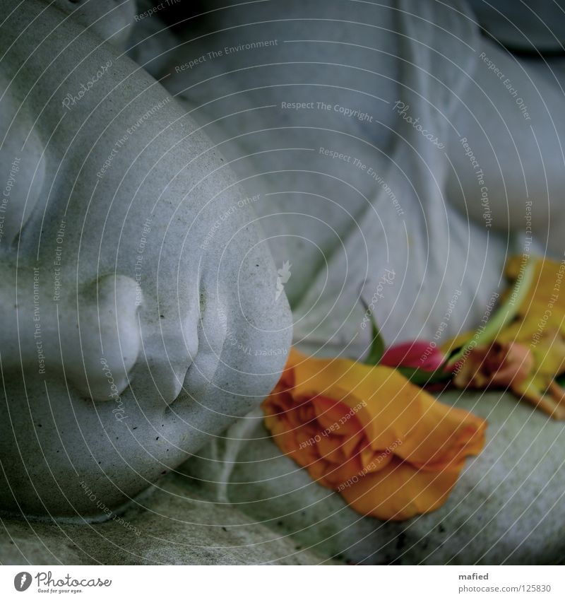 Kindstod Grab Grabmal Grabstein Friedhof Trauer verlieren Abschied Verzweiflung ruhig Hoffnung Herz-/Kreislauf-System Krippentod Blume weiß grau grün Tod