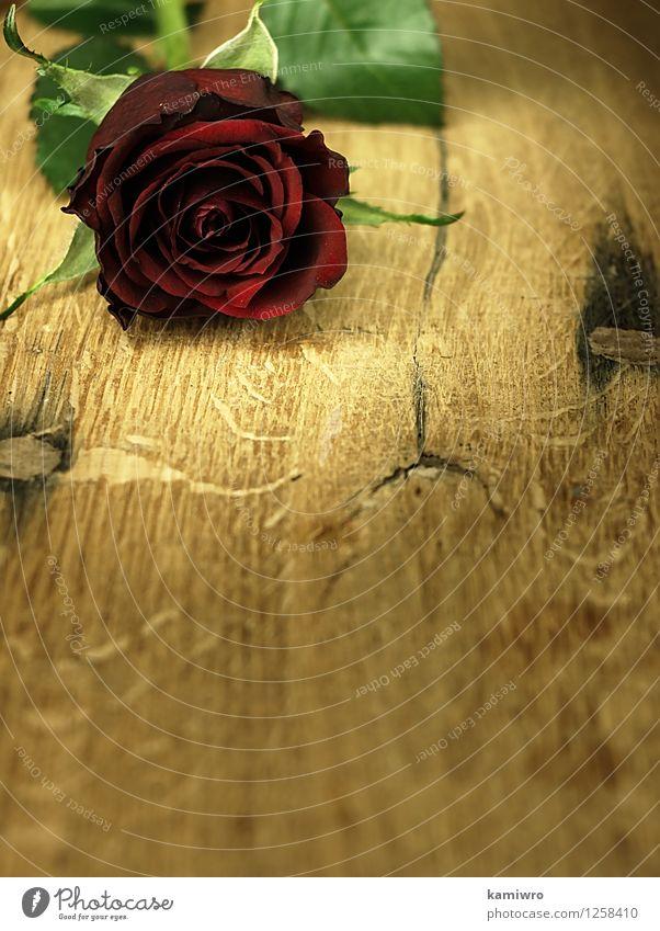 Rote Rose auf einem hölzernen, Eichentisch. Natur schön Farbe Blume rot Blüte Liebe Feste & Feiern hell Design Dekoration & Verzierung Tisch Herz Geschenk