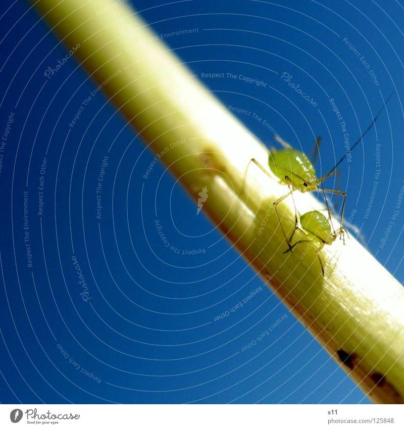 MamaLaus & BabyLaus Himmel Natur blau grün Pflanze Blume Tier klein Garten Beine Verkehr leuchten Schönes Wetter Insekt Stengel Löwenzahn