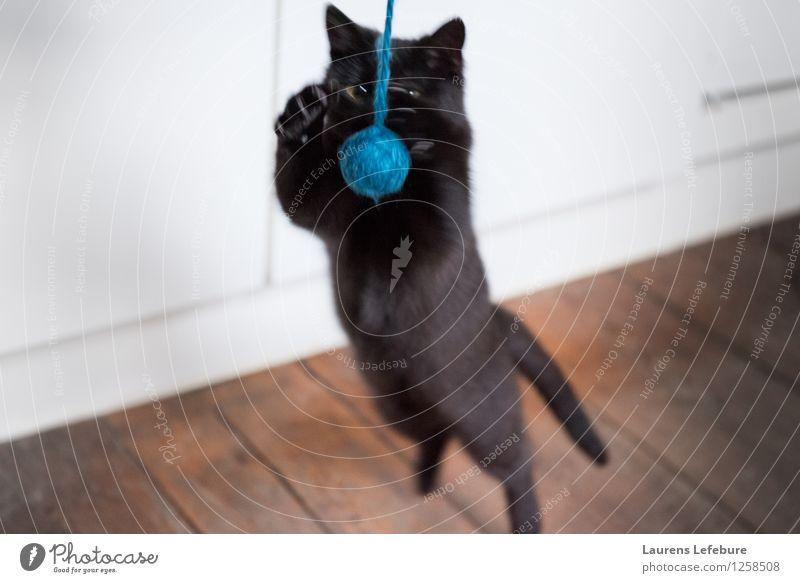 Traumfänger Haustier Katze Spielen Trieb spielerisch Jagd springen angreifend Wolle Ball niedlich lustig jung angreifende Katze Tiefenschärfe schwarze Katze