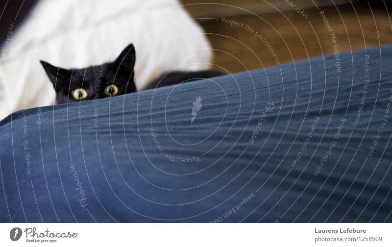 Mensch, was machst du da? Haustier Katze Tiergesicht Tierjunges beobachten Denken Blick bedrohlich gruselig verstecken Katzenauge Trieb schwarz schwarzhaarig