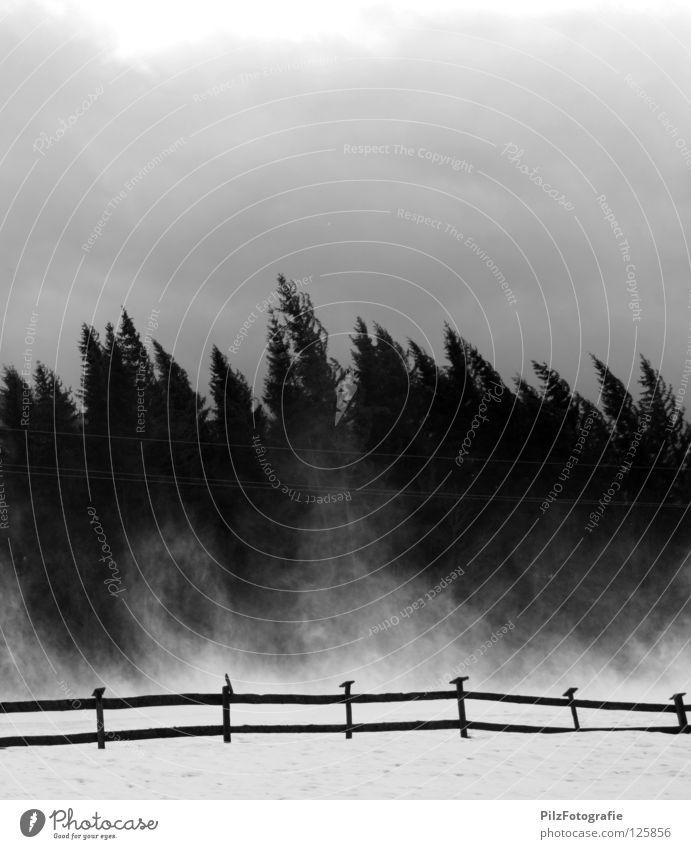 Emma Sturm Baum Zaun schwarz weiß gebeugt extrem Unwetter Holz kaputt umfallen gefährlich Todesangst Spitze Baumkrone Wolken Schwarzweißfoto Angst Panik emma