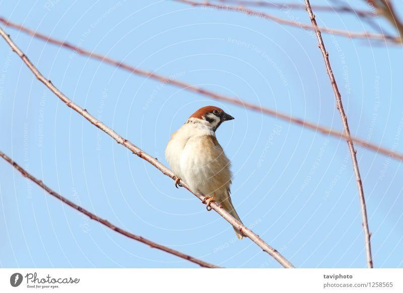Natur Mann Tier Haus Erwachsene Umwelt Leben klein Garten Vogel braun wild Feder sitzen beobachten niedlich