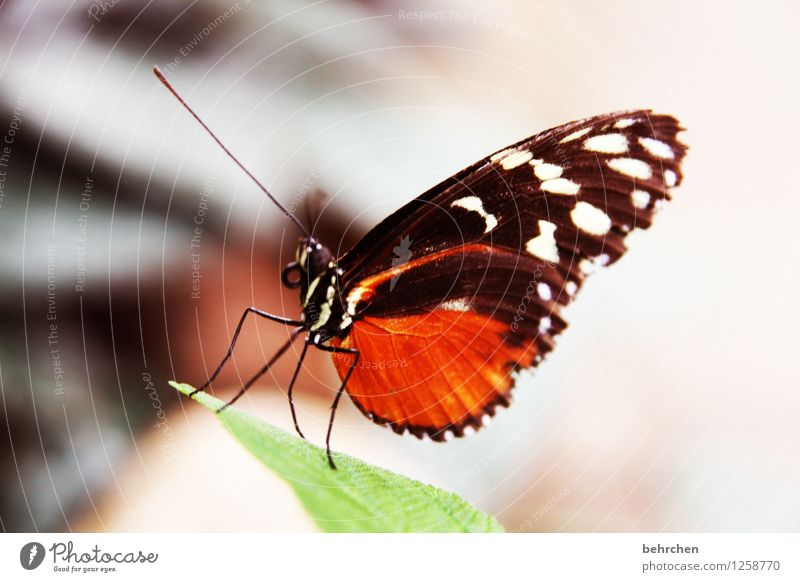 fliegengewicht Natur Pflanze Tier Frühling Sommer Schönes Wetter Baum Sträucher Blatt Garten Park Wiese Wildtier Schmetterling Tiergesicht Flügel Facettenauge 1