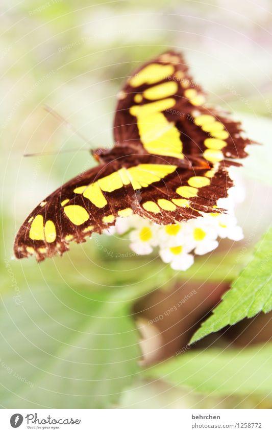 malachit Natur Pflanze Tier Baum Blume Sträucher Blatt Blüte Garten Park Wiese Wildtier Schmetterling Flügel 1 beobachten Blühend Duft Erholung außergewöhnlich