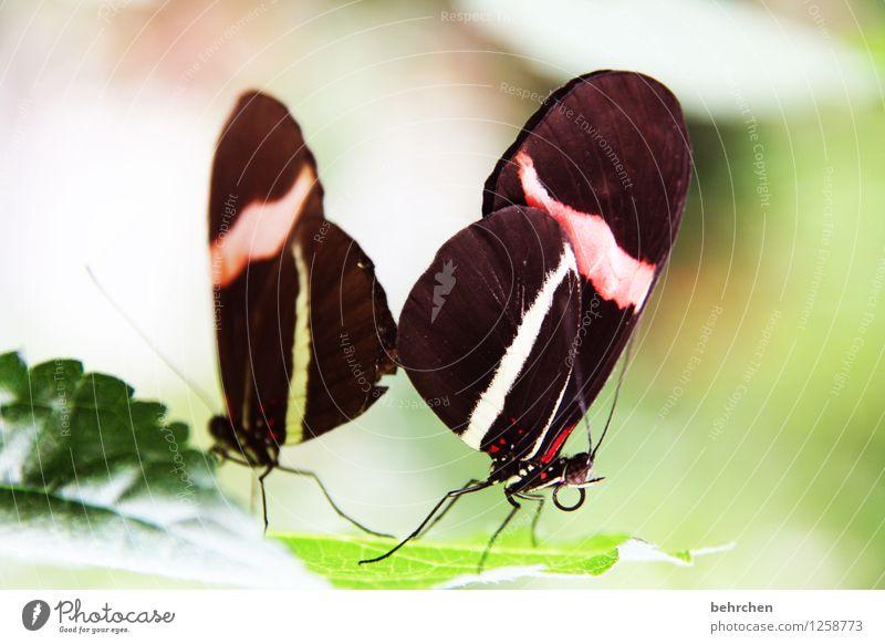 liebe machen Pflanze grün schön Sommer weiß rot Blatt Tier Wald schwarz Liebe Frühling Wiese natürlich Garten außergewöhnlich