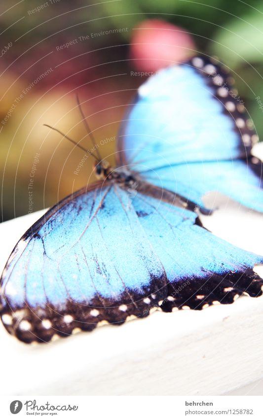 blaues wunder Natur schön Sommer Erholung Tier Frühling Wiese Garten außergewöhnlich fliegen Park elegant Wildtier sitzen Flügel