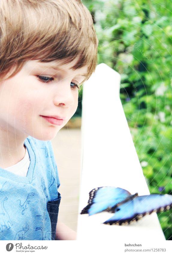 A (lles und so viel mehr) Kind Junge Kindheit Haare & Frisuren Gesicht Auge Nase Mund Lippen 3-8 Jahre Schmetterling blauer morphofalter beobachten entdecken